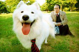 犬飼さんちの犬の画像