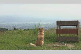 犬と猫と人間と2 動物たちの大震災の画像