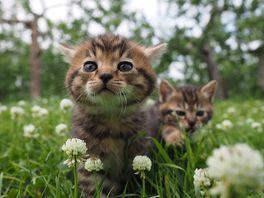 劇場版 岩合光昭の世界ネコ歩き コトラ家族と世界のいいコたちの画像