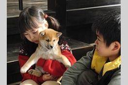 マリと子犬の物語の画像