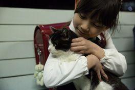 4/猫 ―ねこぶんのよん―の画像