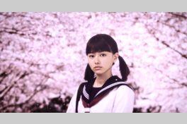桜ノ雨の画像