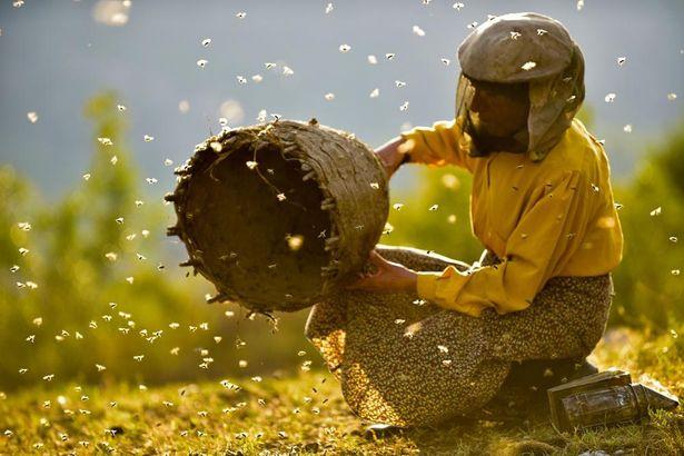 孤立した山岳地帯で自然養蜂を営む女性を3年、実に400時間以上にわたって撮影した『ハニーランド 永遠の谷』