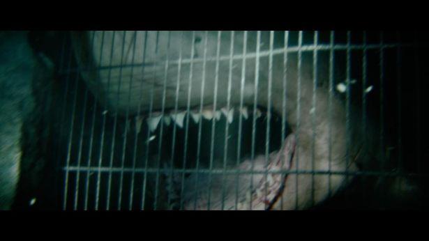 【写真を見る】極悪な歯がズラリ…迫力も申し分なし!『海底47m 古代マヤの死の迷宮』のほか、サメ映画のスチールを一挙掲載