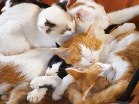 親ネコに甘える子ネコにメロメロ!家族愛にあふれた超キュートなニャンコたち