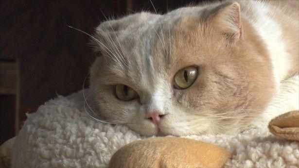 映画「ねこあつめの家」で伊藤淳史演じる佐久本の元に現れたネコ(シナモン)