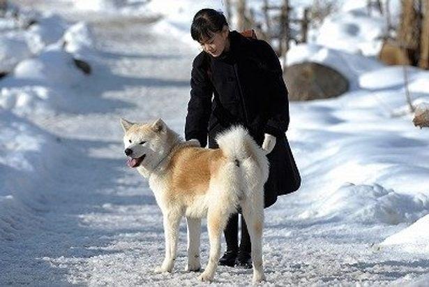 和製「フランダースの犬」とも言える『スノープリンス 禁じられた恋のメロディ』に秋田犬が登場