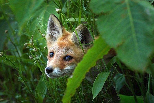 野生動物たちの自然な表情に癒される!