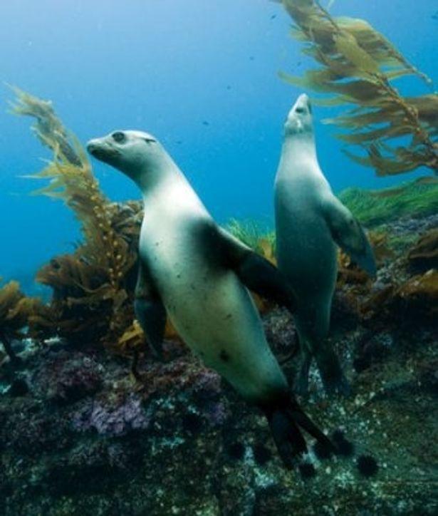 世界中の海から、厳選された映像ばかりを集めたドキュメンタリー大作が登場