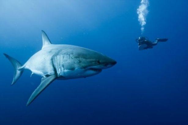 ホオジロザメと遭遇