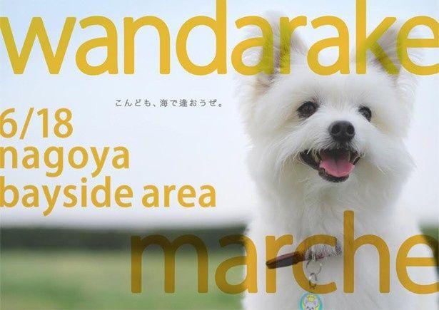 愛犬と一緒に楽しめるイベントに参加してみよう