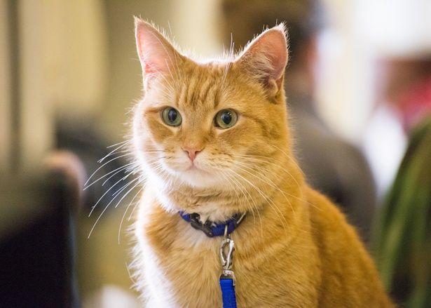 つぶらな瞳がキュートな野良猫ボブ