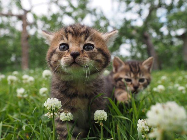 津軽のリンゴ畑に暮らすコトラの子供たち