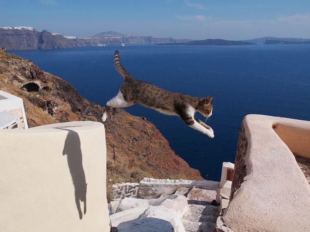 """【写真を見る】ギリシャでも""""飛び猫""""を発見!その名もジャンパー"""