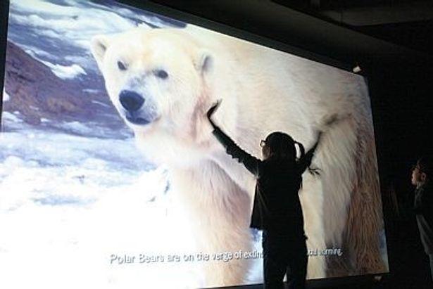 画面いっぱいに映し出されるリアルな動物たちに感動!
