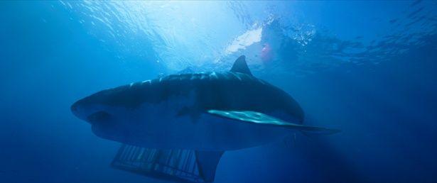 檻よりも巨大なサメに姉妹は大興奮