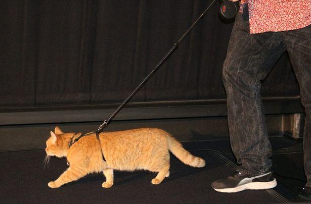 ジェームズの肩の上ではなく、歩いて来場のボブ。日本の映画館の歩き心地は?