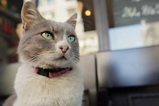 猫目線で描かれる『猫が教えてくれたこと』の予告編が解禁!