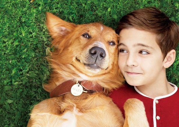 犬好きの夢を叶えてくれる!映画『僕のワンダフルライフ』