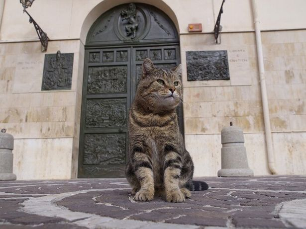 シチリアに暮らすドメニコは、ボスの貫禄たっぷり