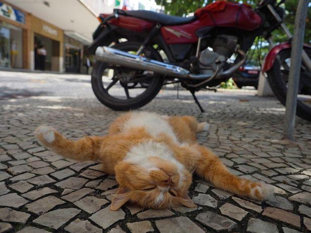 リオデジャネイロのシキンニョは、何があっても動じません