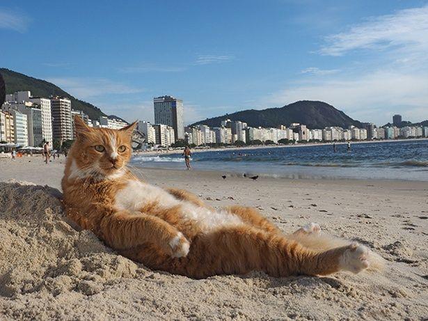 """ブラジルの砂浜で寝そべる""""ビーチの王様""""シキンニョ♂"""