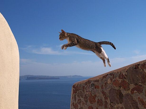 【写真を見る】ギリシャのエーゲ海越しに見事なジャンプを披露してくれたジャンパー♀