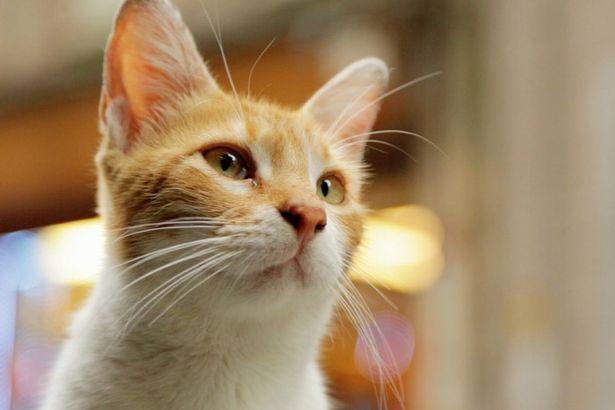 執拗に食べ物をせがむ母猫サリ。ブティックの店主が貴重なサポーター