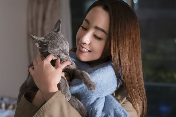 『猫は抱くもの』の予告編が到着!