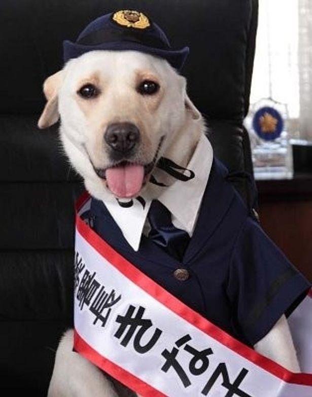 『きな子 見習い警察犬の物語』に登場するラブラドール・レトリバーが超かわいい