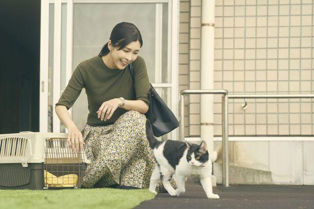 【写真を見る】大のネコ好きだという竹内結子。気まぐれなナナに振り回される?