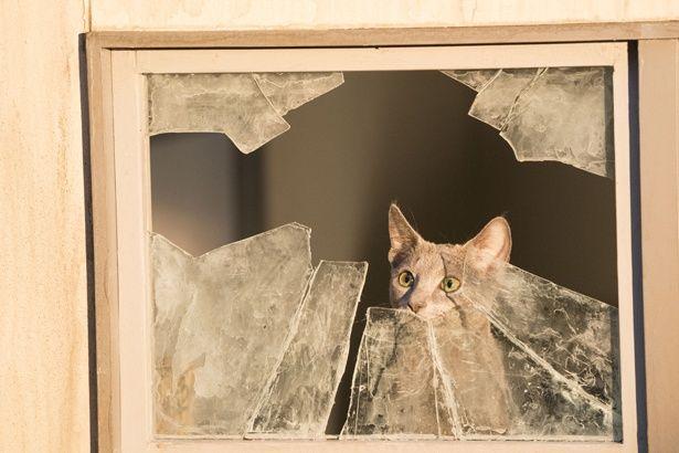 窓の外を見つめ黄昏れる良男