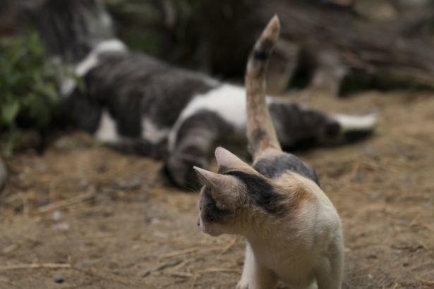 個性豊かな猫たちにメロメロになること間違いなし!
