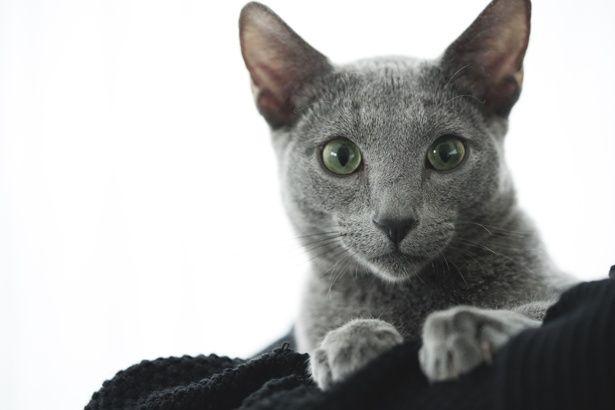 超かわいい猫が多数登場する『猫は抱くもの』