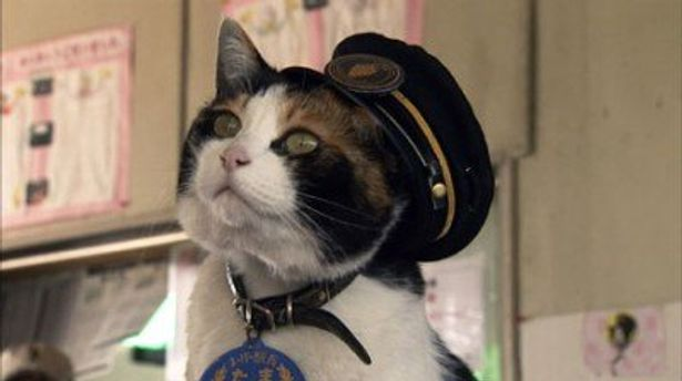 駅長として人気を集める猫のたま