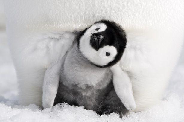 アカデミー賞長編ドキュメンタリー賞に輝いた前作から12年を経て製作された『皇帝ペンギン ただいま』