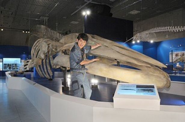 「大哺乳類展−海のなかまたち」と「飛び出せ!科学くん」がコラボ。田中直樹はシロナガスクジラの全身複製骨格と記念撮影