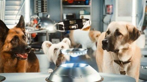 【写真】イヌとネコの世界にもスパイ組織が!