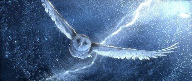 フクロウの飛行シーンに注目
