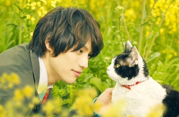 福士蒼汰の猫を見つめる優しい眼差しに胸キュン