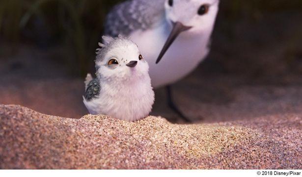 第89回アカデミー賞短編アニメーション賞に輝いた『ひな鳥の冒険』