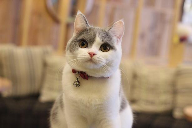 総勢24匹もの猫ちゃんが登場する『猫カフェ』