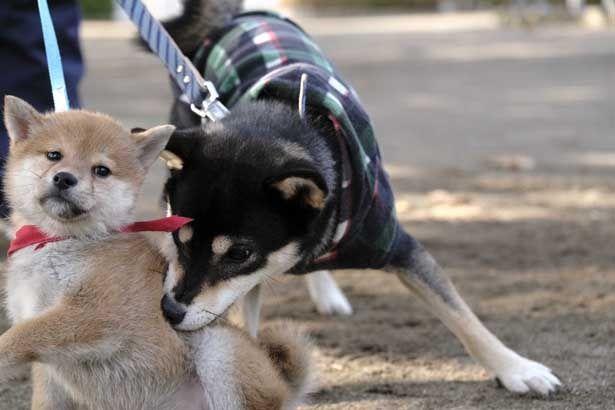 ほかの犬にちょっかいを出し元気いっぱい!