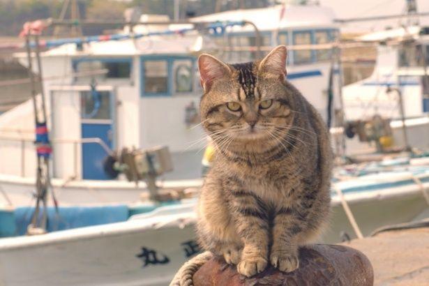 やっぱり猫には港が似合う!(『ねことじいちゃん』)