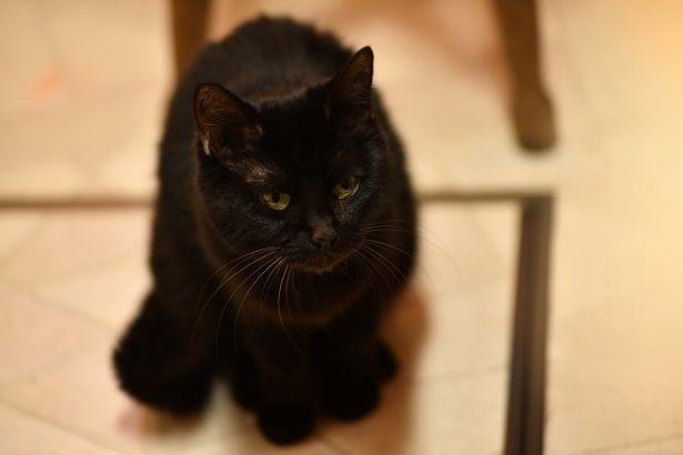 老夫婦と黒猫の生活を描く『初恋~お父さん、チビがいなくなりました』