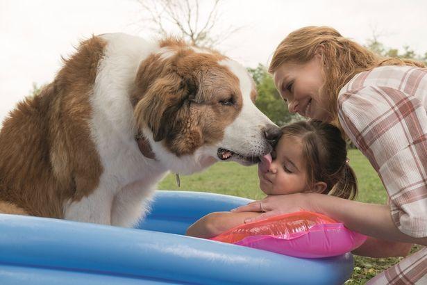 愛犬と人間との深い愛情が感動を呼んだ『僕のワンダフル・ライフ』(17)の続編『僕のワンダフル・ジャーニー』の予告編が公開