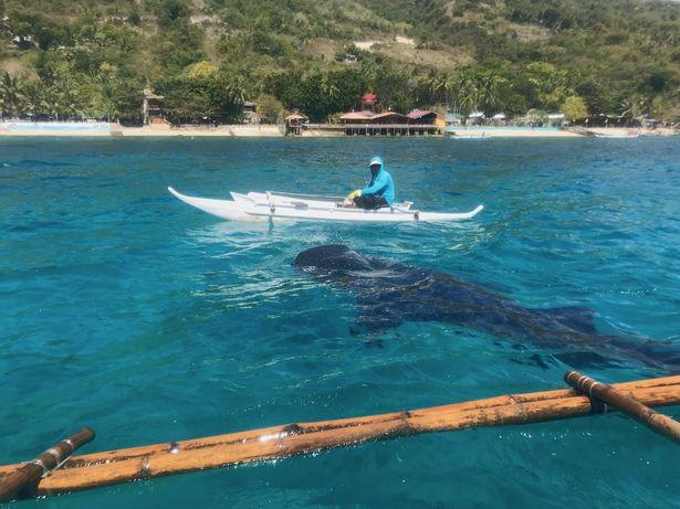 ジンベイザメと泳げるスポットも!
