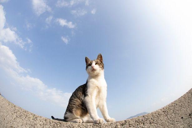"""かわいらしい猫ちゃんが登場する""""猫映画""""が立て続けに公開!(『ダヤンとタマと飛び猫と ~3つの猫の物語~』)"""