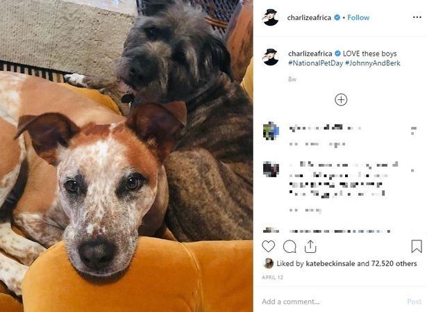 シャーリーズ・セロンは今まで6匹以上の犬の里親となった動物愛護家