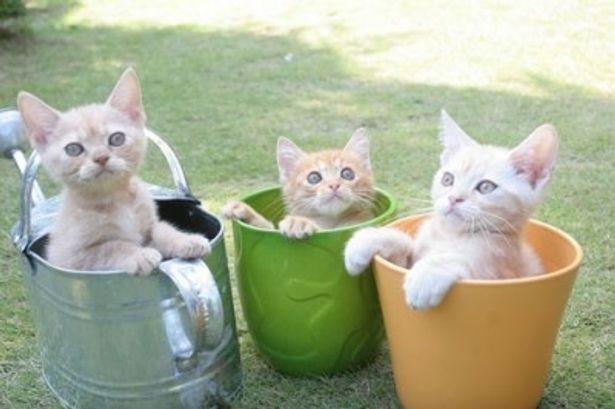 ネコ好きにはたまらない可愛すぎる3Dムービーが誕生